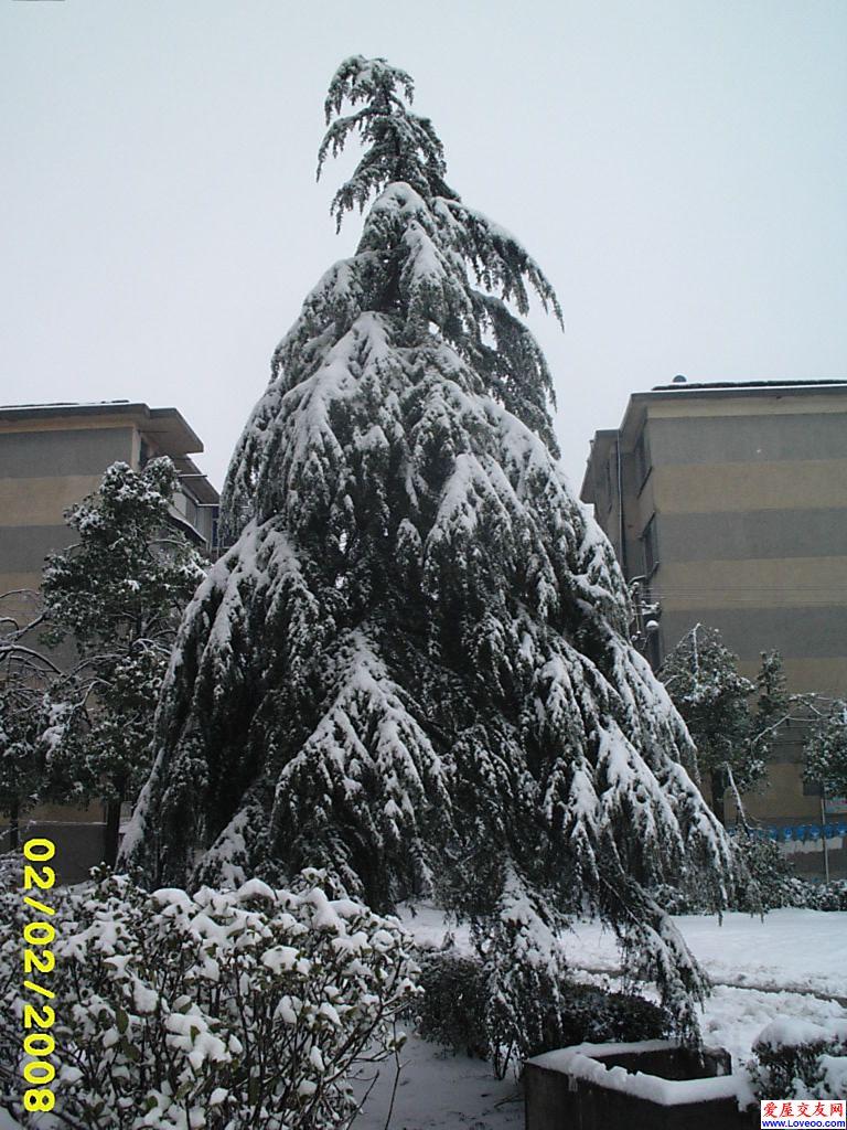 y1h2b3xy 树木!