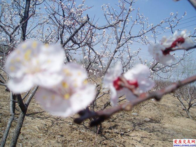翔2009 梅花朵朵开